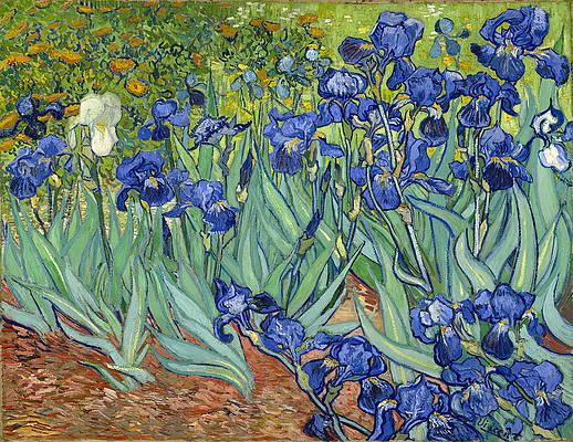 Irises Print by Vincent van Gogh