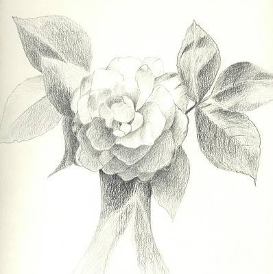 Реалистичный рисунок цветка - Абракадабра от Хелены Тиайнен