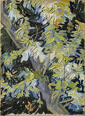 Acacia in Flowers Print by Vincent van Gogh