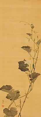 Реалистичный рисунок цветка - Цветы калабаша и жук от Маруямы Ошина
