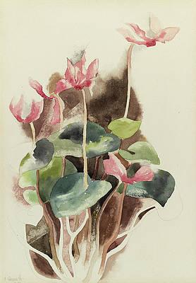 Рисунок дикого цветка - цикламен от Чарльза Демута