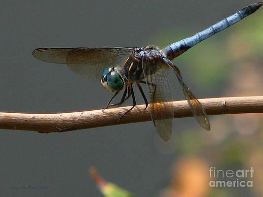 Dragonfly Soft Landing