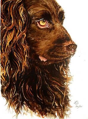 Boykin Spaniel Art Fine Art America