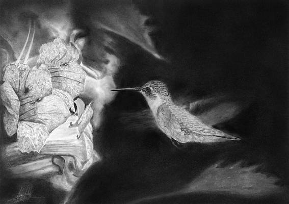 Realistic Flower Drawing - Hummingbird Flying to Flower by James Schultz