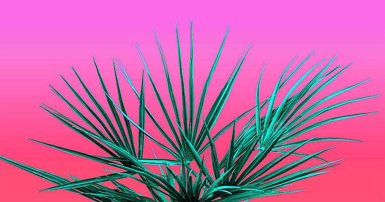 Neon Plant Art Page 5 Of 12 Fine Art America