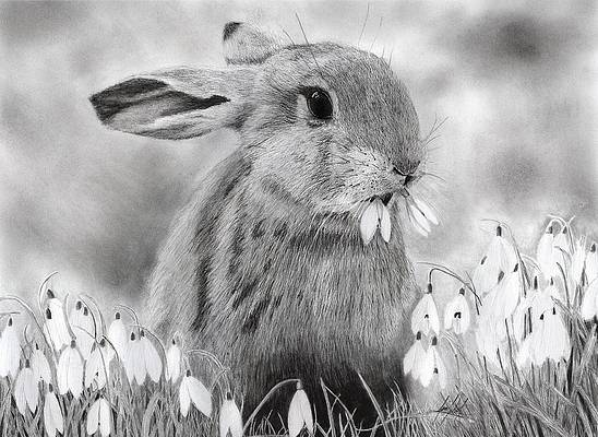 Realistic Flower Drawing - Rabbit Eating Flowers by James Schultz