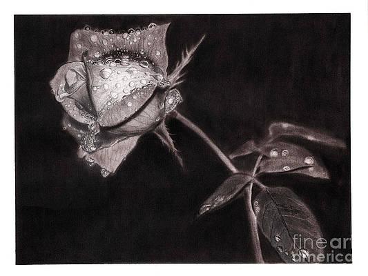 Реалистичный рисунок цветка - капли дождя на розе от PinayPencilArt