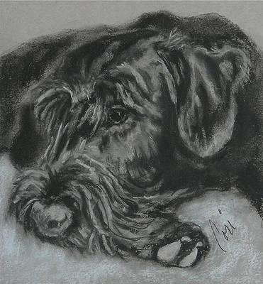 Giant Schnauzer Dog Art Note Cards By Cori Solomon