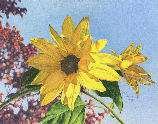 Realistic Flower Drawing - Sunflower I by Ruth Johnson