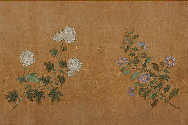 Realistic Flower Drawing - Ten Chrisantemums 2 by Zhao Mengfu