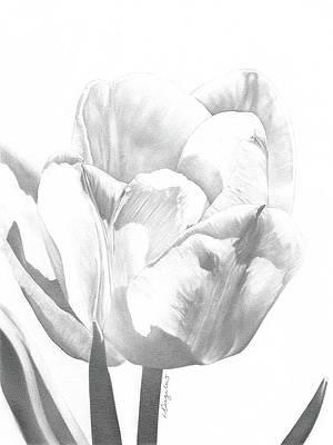 Реалистичный рисунок цветов - Тюльпаны №1 от Лорен Бигелоу