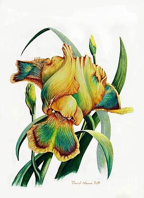Realistic Flower Drawing - Tye Dyed by David Neace