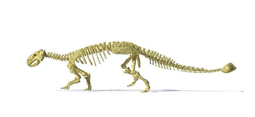 Dinosaur Art For Sale