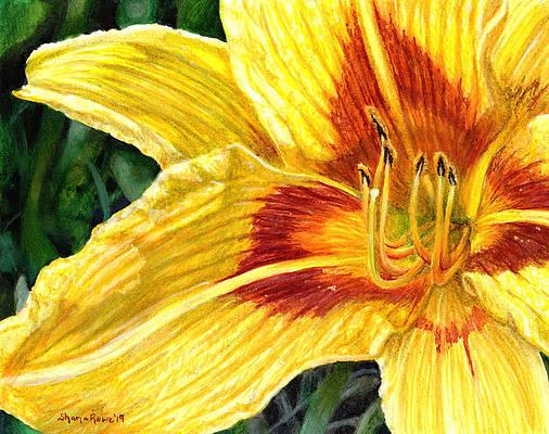 Реалистичный рисунок цветка - Бонанза вблизи от Шаны Роу Джексон
