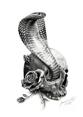 Wild Flower Drawing - Cobra by Miro Gradinscak