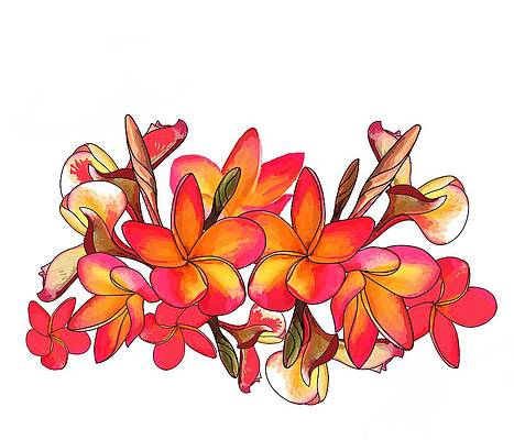 Realistic Flower Drawing - Coloured Frangipani White bkgd1 by Joan Stratton