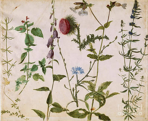 Wild Flower Drawing - Eight Studies Of Wild Flowers by Heritage Images