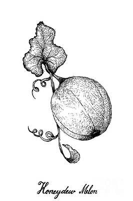 Cantaloupe Drawings Fine Art America Want to discover art related to cantaloupe? cantaloupe drawings fine art america