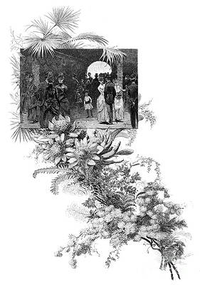 Wild Flower Drawing - Manly Wild Flower Show, Sydney, New by Print Collector