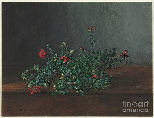 Wild Flower Drawing - Still Life With Wild Flowers by Heritage Images