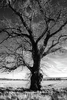 Photograph - Tree, Mason Valley, Nevada by Day Williams
