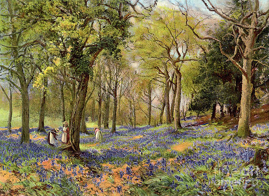 Wild Flower Drawing - Wild Hyacinths In A Surrey Copse, 1906 by Print Collector
