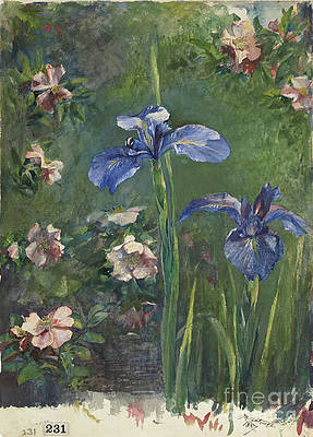 Wild Flower Drawing - Wild Roses And Irises by Heritage Images
