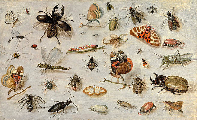 A Study of Butterflies, Moths, Spiders, and Insects Print by Jan van Kessel the Elder