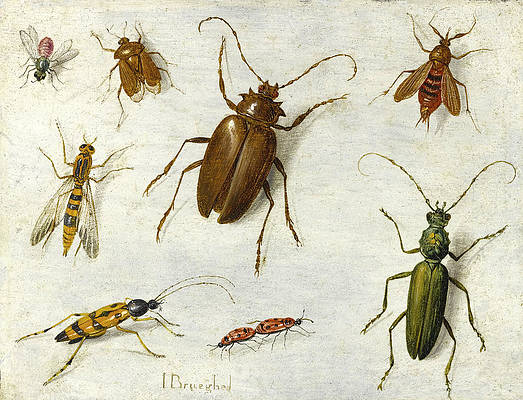 A Study of Insects Print by Jan van Kessel the Elder