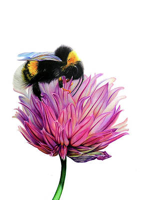 Realistic Flower Drawing - Bumble Bee by Rachel Noiles