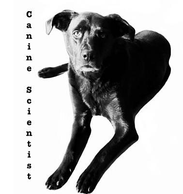 Canine scientist by SICB office dog Shady