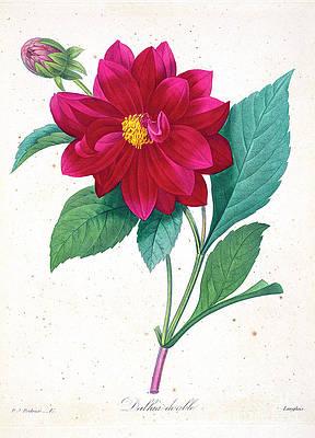 Red Flower Drawings Fine Art America