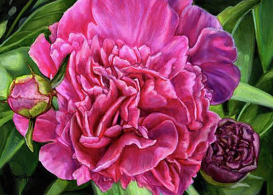Realistic Flower Drawing - Pretty Pink Peonies by Shana Rowe Jackson