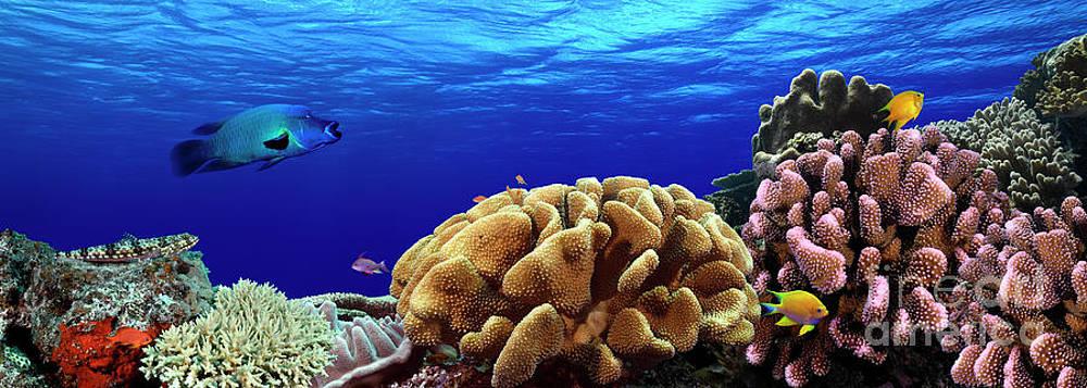Underwater Panoramic Photograph By David Rickerd