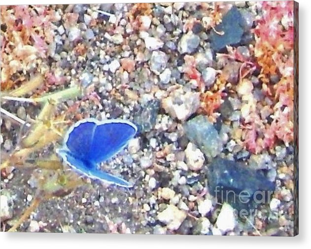 Sand Acrylic Print featuring the photograph Blue Visions by Marilyn Diaz