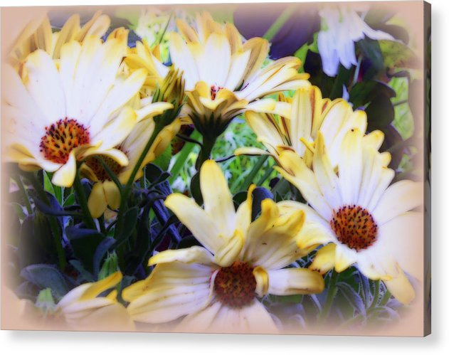 Marigolds Acrylic Print featuring the photograph Marigold Blooms by Carol Hynes