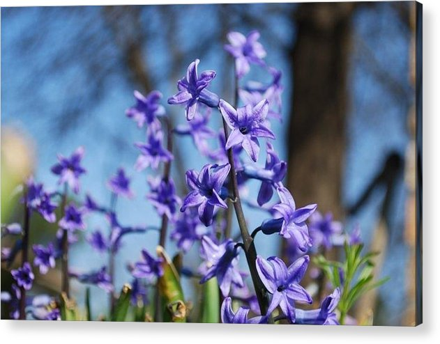 Nature Acrylic Print featuring the photograph Purple Bell by April Rouse