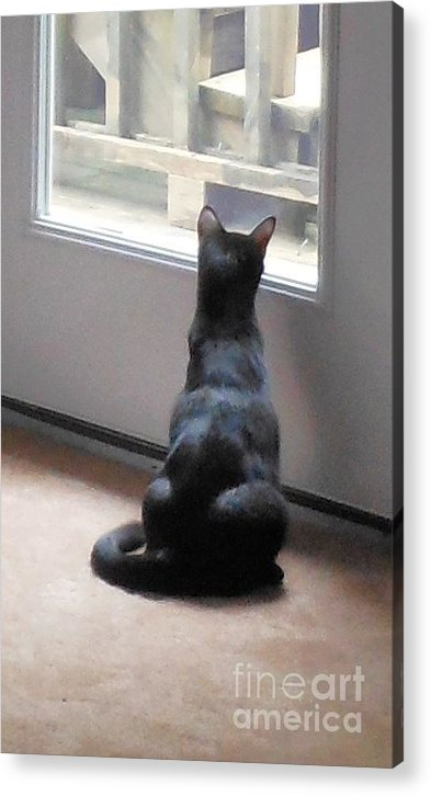 Cat Acrylic Print featuring the photograph Work of Art by Beebe Barksdale-Bruner