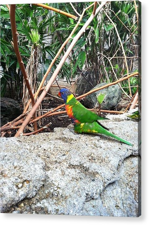 Exotic Bird Acrylic Print featuring the photograph Bird In The Bush by Travis Deaton