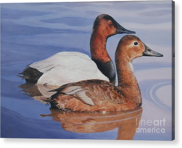 Ducks Acrylic Print featuring the painting Canvasbacks by Don Evans