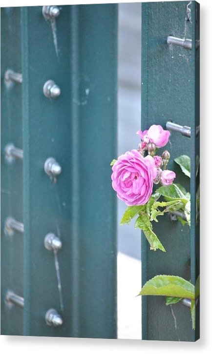 Rose Acrylic Print featuring the photograph Every Rose... by Nimmi Solomon