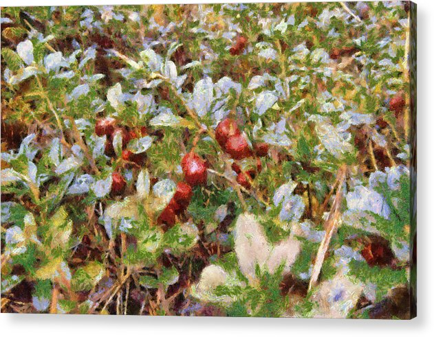 Lingonberry Acrylic Print featuring the painting Lingonberry by Algimantas Gavenauskas