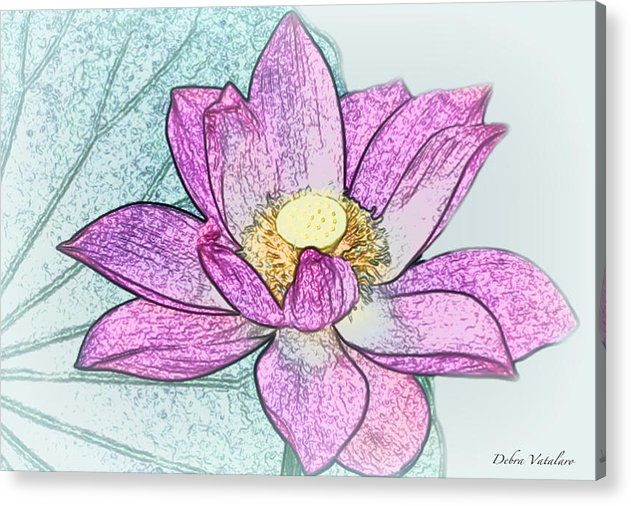Clored Pencil Drawing Acrylic Print featuring the drawing Lotus Flower by Debra   Vatalaro