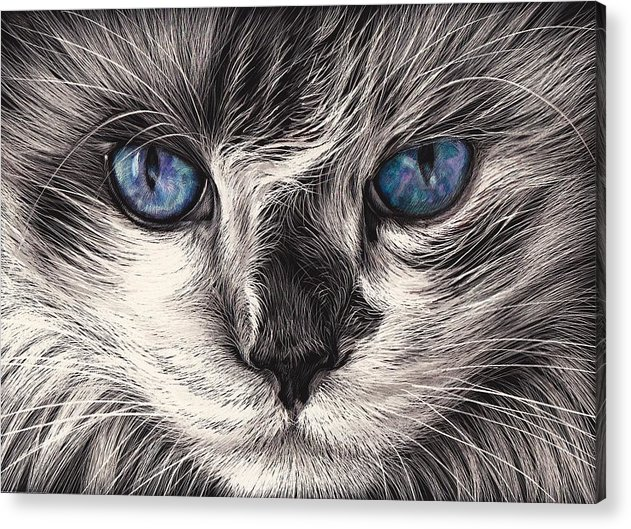 Cat Acrylic Print featuring the mixed media Mad Cat by Elena Kolotusha