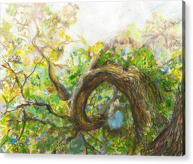 Oak Tree Acrylic Print featuring the drawing Oak Tree by Rebecca Meredith