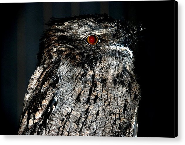 Acrylic Print featuring the photograph Owl by Christy Phillips