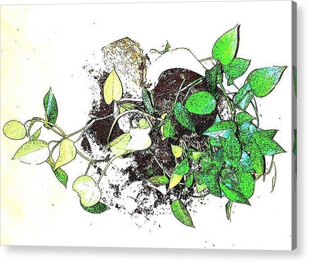 Plant Acrylic Print featuring the mixed media Plant Falls by YoMamaBird Rhonda