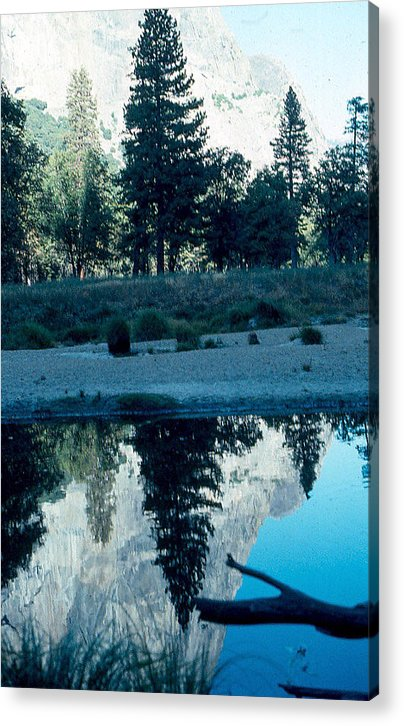 Ponderosa Pine Acrylic Print featuring the photograph Ponderosa Reflections by Chris Gudger