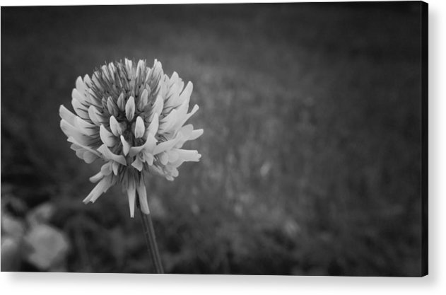 Flower Acrylic Print featuring the photograph Simple Life by Kristina Savasta
