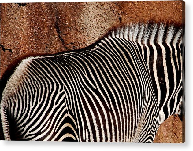 Acrylic Print featuring the photograph Stripes by Christy Phillips